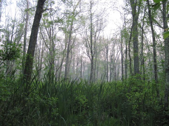 wbridgewaterswamp