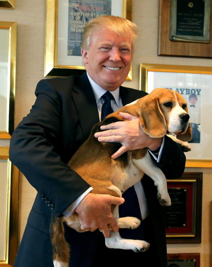 Trump Westminster Dog Show